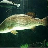 Backyard Aquaculture – Raise Fish for Profit