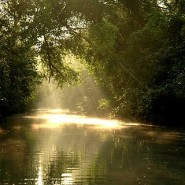 Sundarban – The World's Largest Natural Mangrove Forest in Bangladesh