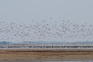 640px-DucksPulicat