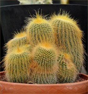 cactus-217194_1280