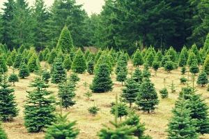 christmas-235357_1280