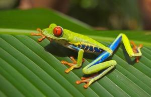 tree-frog-69813_1280