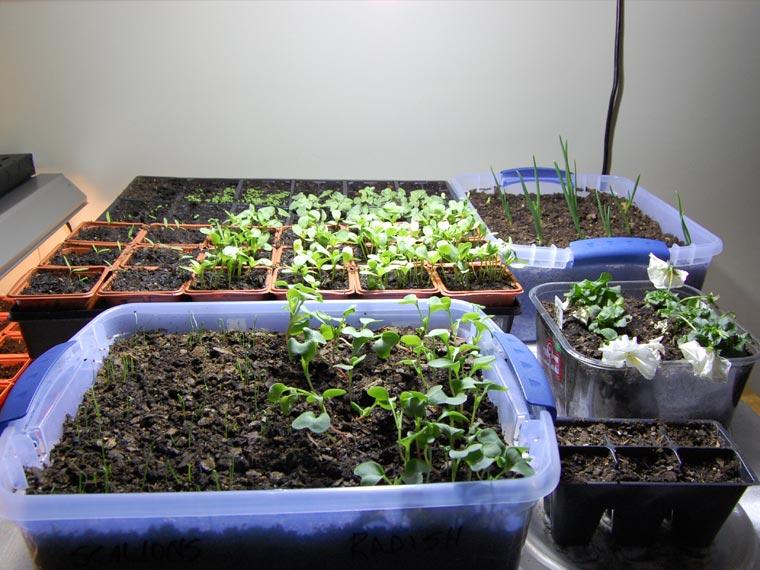 top 5 herbs for your indoor kitchen garden environmental