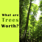 Value of Trees – How Much Is a Tree Really Worth?