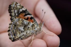 butterfly-757960_1280