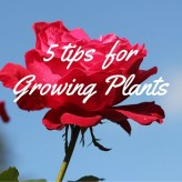 5 tips  for growing plants – Don't let the Cold Winter Stop You!