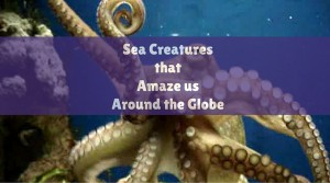 Amazing sea creatures